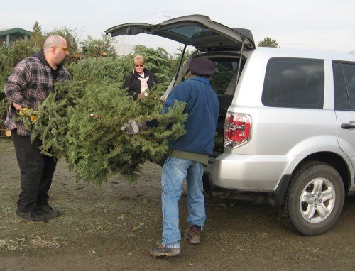 Christmas tree recycling in Reno and Sparks, Nevada, NV
