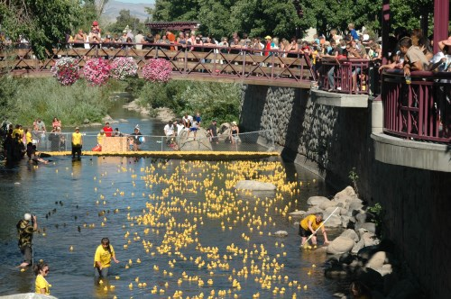 Crowd cheers the ducks at the finish line, Nevada Humane Society Duck Race and Festival, Reno, NV