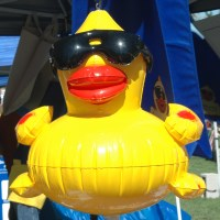 Duck Race Festival, Nevada Humane Society, Reno, NV