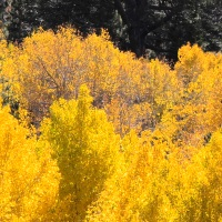 Fall break, Washoe County Schools, camps, activities, Reno, Nevada, NV