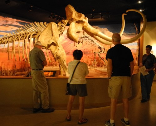 Columbian mammoth exhibit at the Nevada State Museum in Carson City