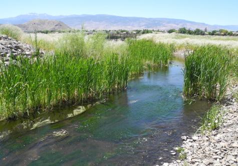Rosewood Nature Study Area, parks, Reno, Nevada, NV
